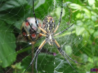 I found this guy in the Botanical Garden section of the zoo.  I love spiders, I do, but man, getting close enough to take a picture of one freaks me out.  Why couldn't God make spiders cute?